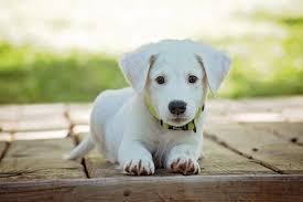 Best Dog Insurance