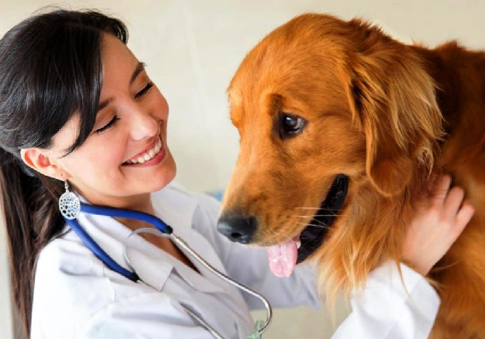 overall health of golden retrievers