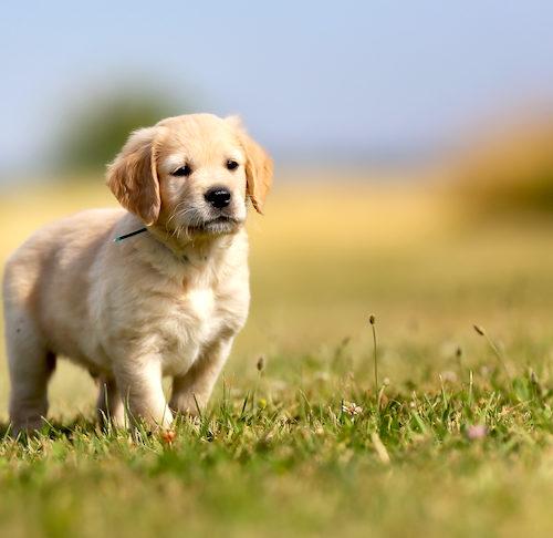 periodic seizures in dogs
