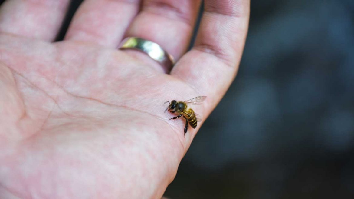 Bee Sting Benefits: A Comprehensive And Complete Guide To The Bee World!